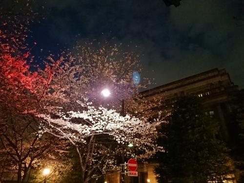 日本橋の桜♪_c0100865_20423784.jpg