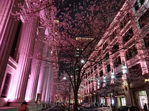 日本橋の桜♪_c0100865_20460324.jpg