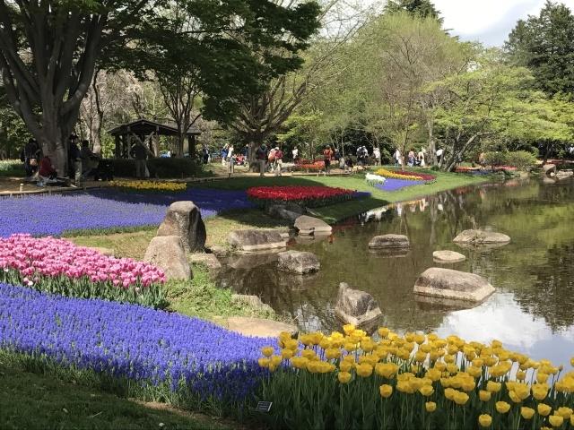 昭和記念公園のチューリップ 2018_a0180279_18125032.jpg