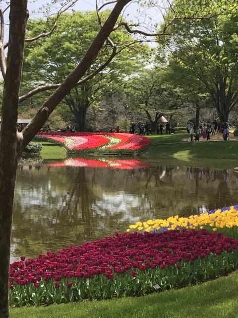 昭和記念公園のチューリップ 2018_a0180279_18144201.jpg