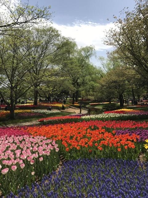 昭和記念公園のチューリップ 2018_a0180279_18161994.jpg