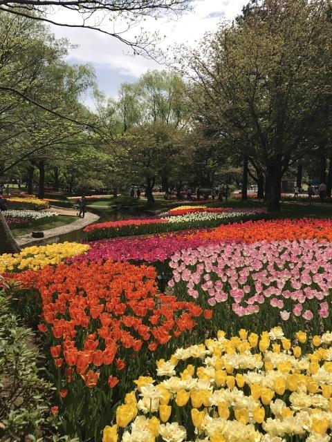 昭和記念公園のチューリップ 2018_a0180279_18165585.jpg