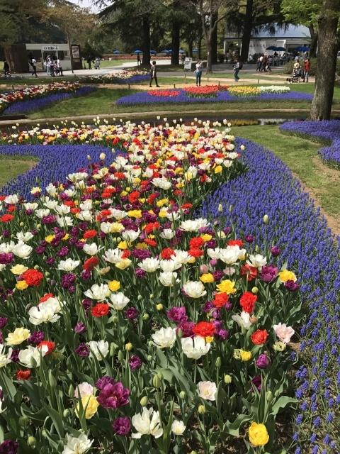 昭和記念公園のチューリップ 2018_a0180279_18212095.jpg