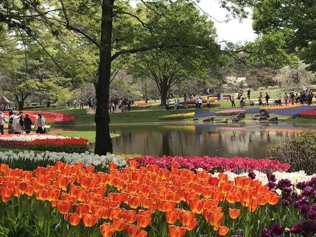 昭和記念公園のチューリップ 2018_a0180279_18220718.jpg