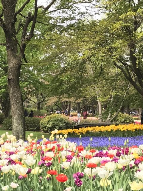 昭和記念公園のチューリップ 2018_a0180279_18232632.jpg