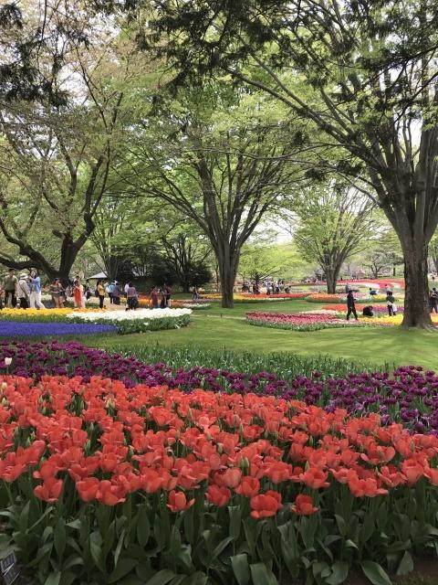昭和記念公園のチューリップ 2018_a0180279_18243957.jpg