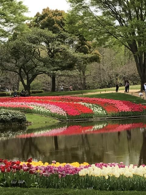 昭和記念公園のチューリップ 2018_a0180279_18254037.jpg