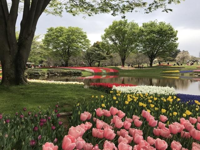 昭和記念公園のチューリップ 2018_a0180279_18262200.jpg