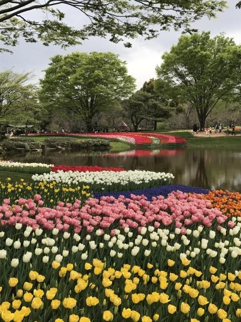 昭和記念公園のチューリップ 2018_a0180279_18272567.jpg