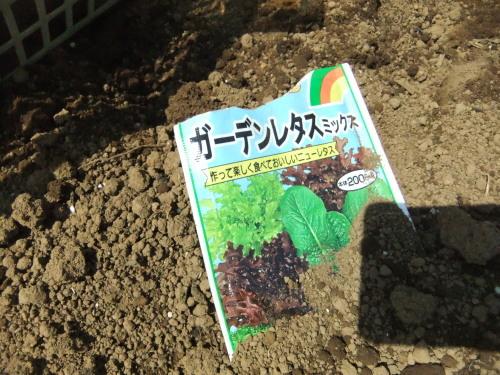 桜に見守られ....種まき_b0137932_08232650.jpg