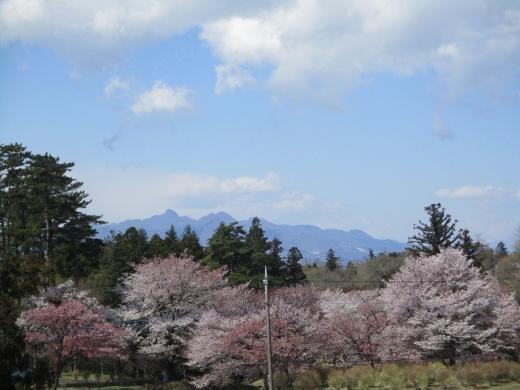 日曜日のお花見     4月10日_d0127634_11300053.jpg