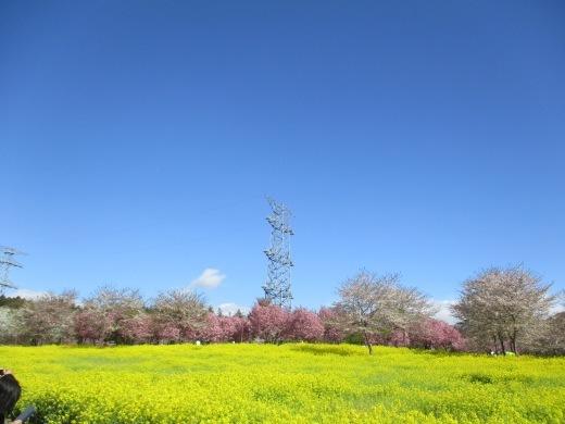 日曜日のお花見     4月10日_d0127634_11341638.jpg