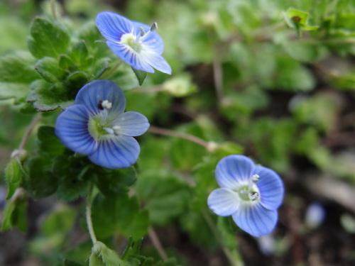 春の野の花_e0240147_09123271.jpg