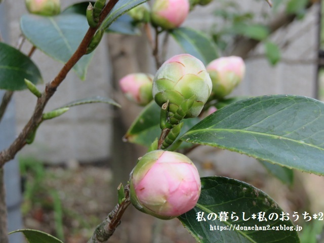 ++春は癒しがいっぱい*++_e0354456_12430390.jpg