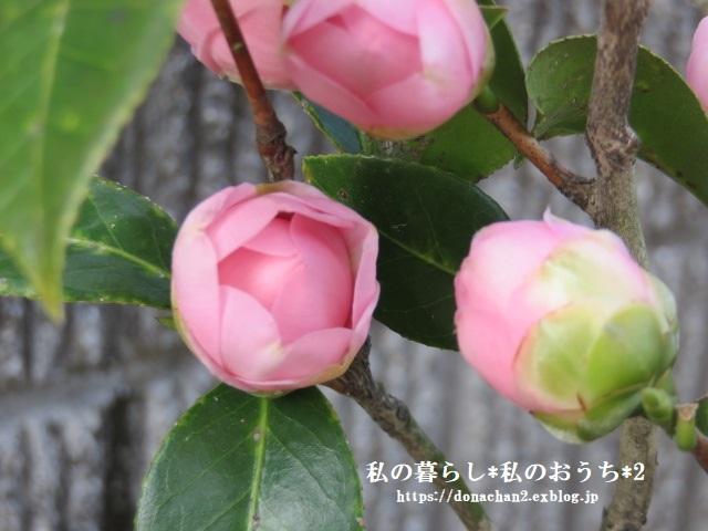 ++春は癒しがいっぱい*++_e0354456_12455446.jpg