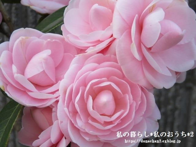 ++春は癒しがいっぱい*++_e0354456_12465022.jpg