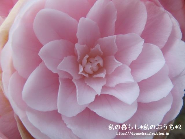 ++春は癒しがいっぱい*++_e0354456_12470305.jpg