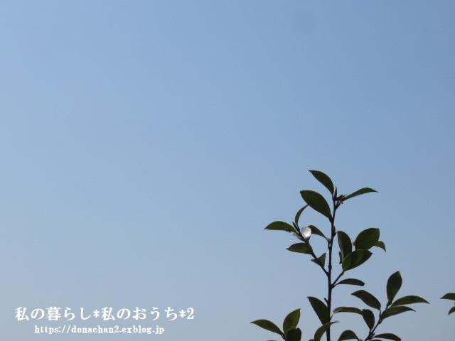 ++春は癒しがいっぱい*++_e0354456_12582504.jpg