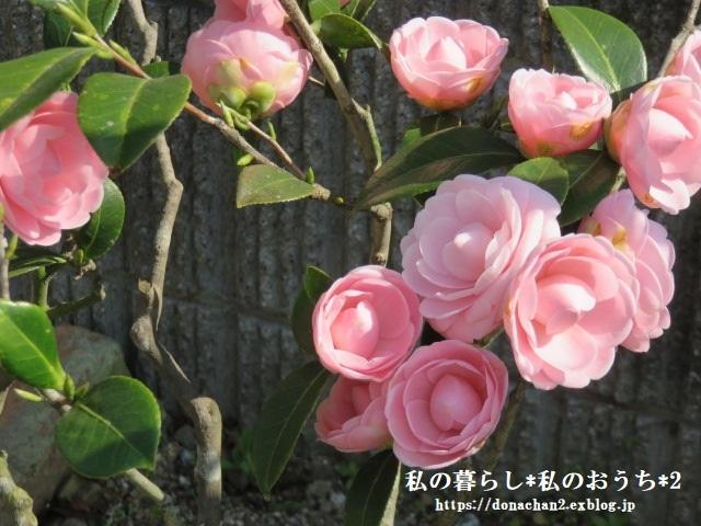++春は癒しがいっぱい*++_e0354456_13291405.jpg