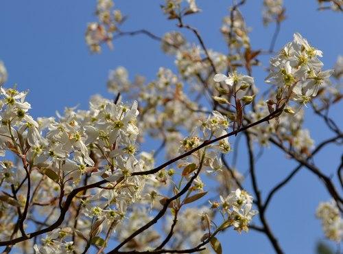 ポスト桜、山の主役、脇役は ・・・_b0102572_21342367.jpg