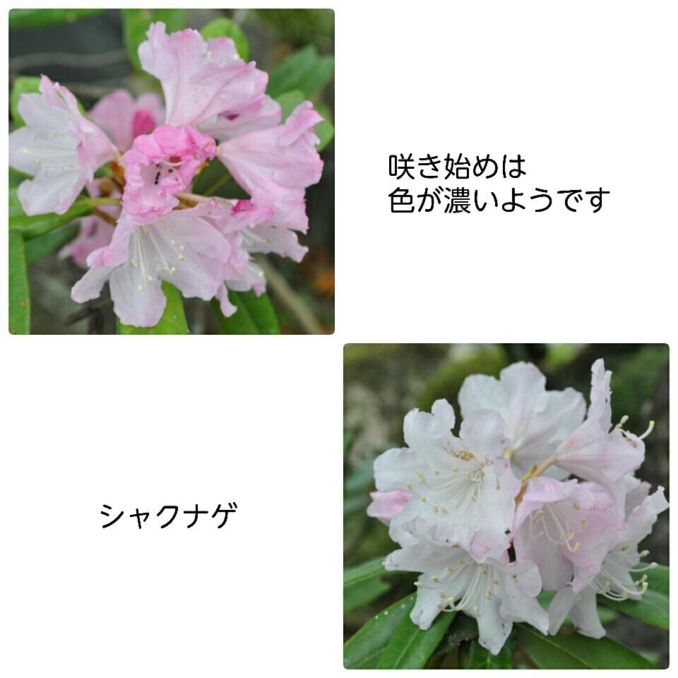 a0143388_10085940.jpg