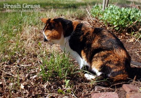 新鮮な草に舌鼓。からの、チロ出し。_b0253205_01215725.jpg