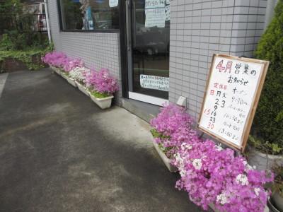 桜草でお出迎え_e0150006_10241421.jpg