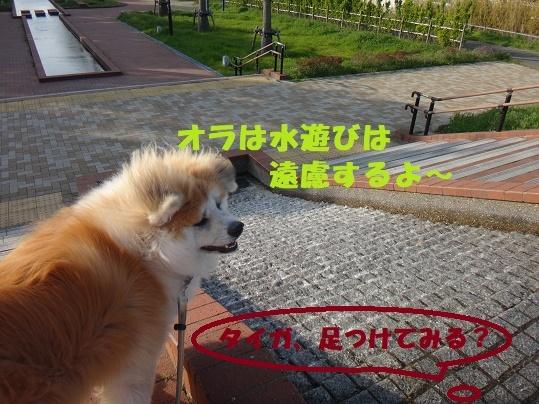 f0121712_08522626.jpg