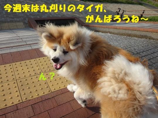 f0121712_08523133.jpg