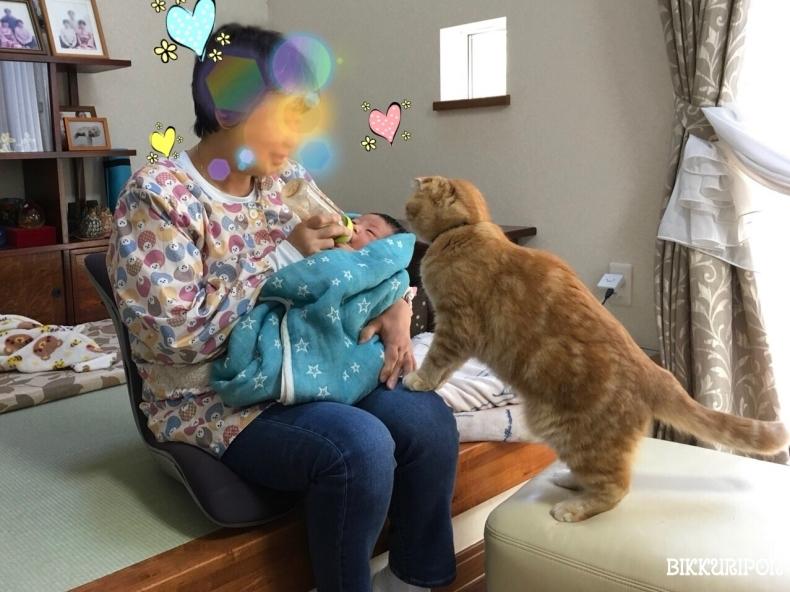 赤ちゃんと猫_d0344913_09564149.jpg