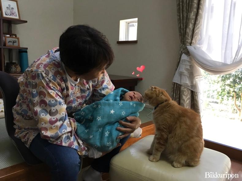 赤ちゃんと猫_d0344913_09565172.jpg