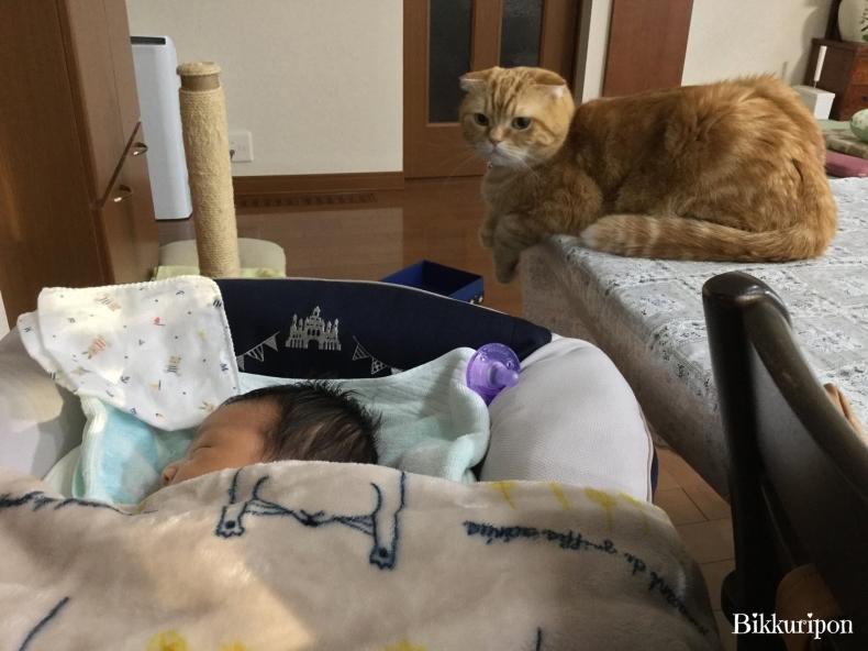 赤ちゃんと猫_d0344913_09565646.jpg