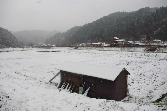 No 141   雪に震える新庄村がいせん桜 (2018年4月8日)_d0341514_20234962.jpg