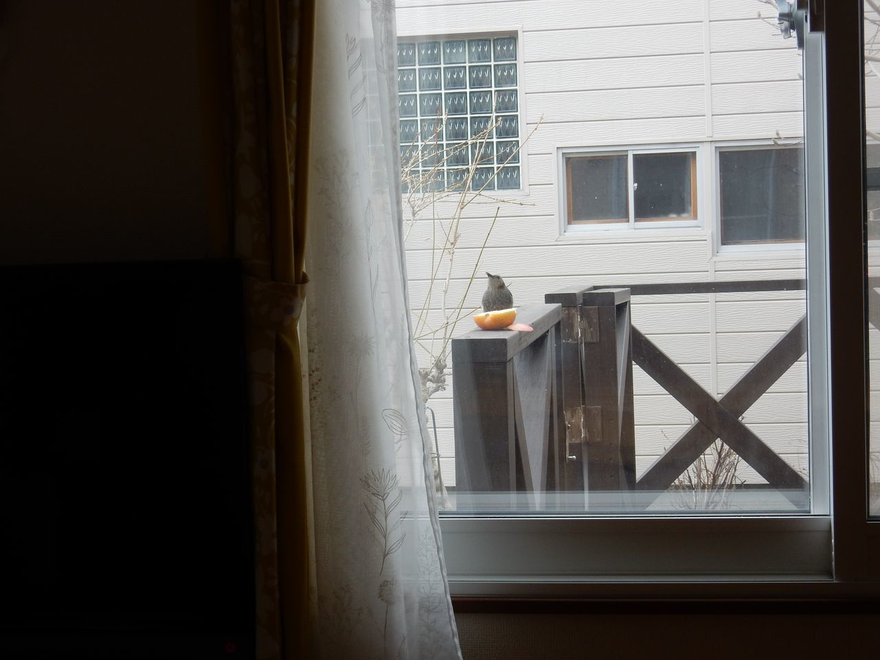 窓辺にやってきたヒヨドリ_c0025115_21294915.jpg