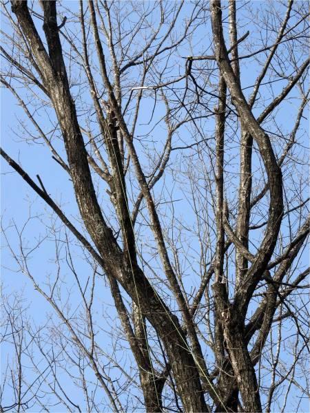 木の枝を落すお仕事_b0174425_15492210.jpg