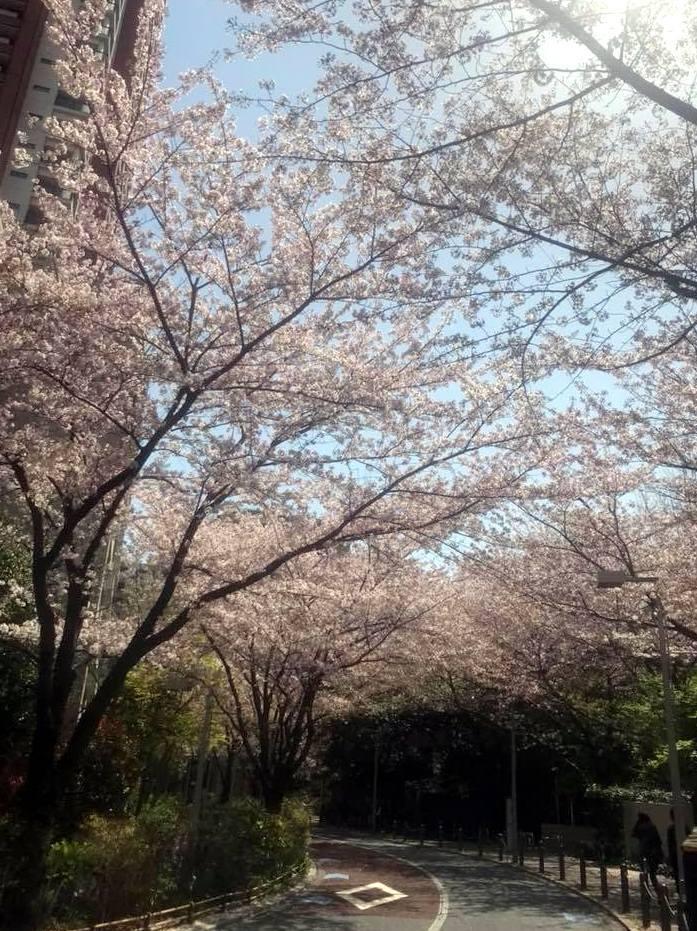 お花見ラン_a0231828_16375128.jpg