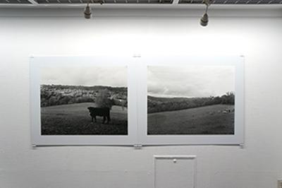 「ある牛の旅 Hiro TOBE写真展」開催中です!_f0171840_15003949.jpg