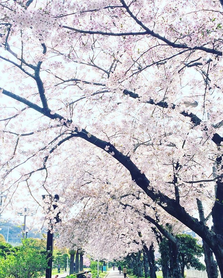 2018桜日記.2_f0206741_17322986.jpg