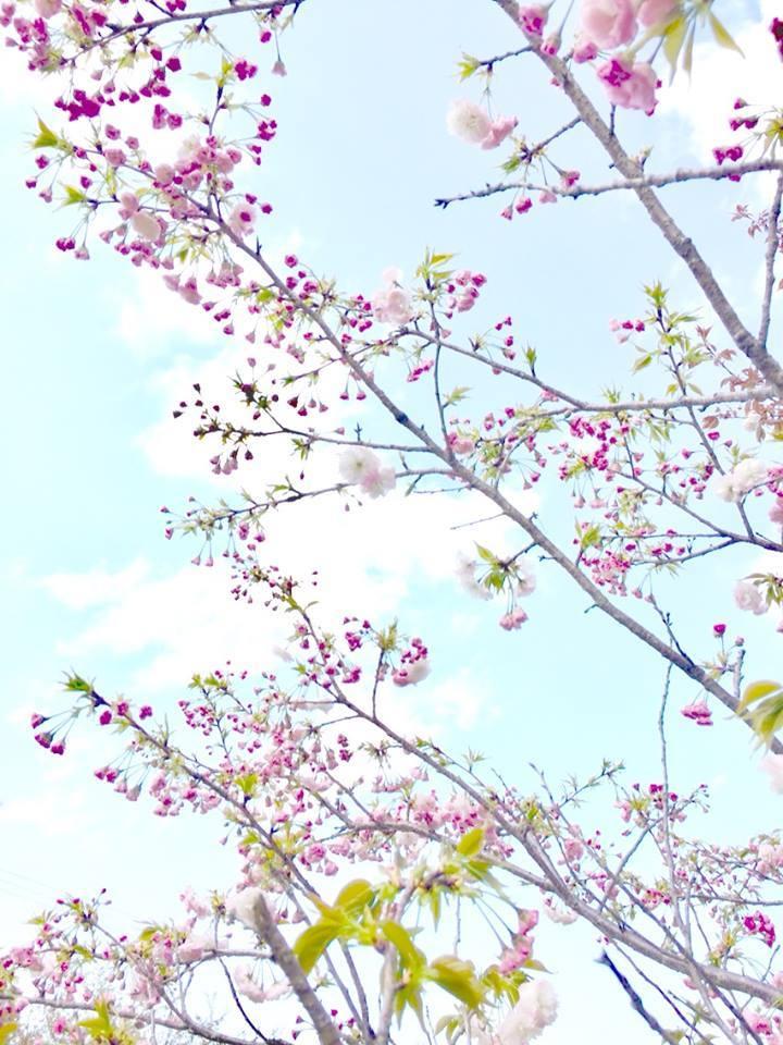 2018桜日記.2_f0206741_17341879.jpg