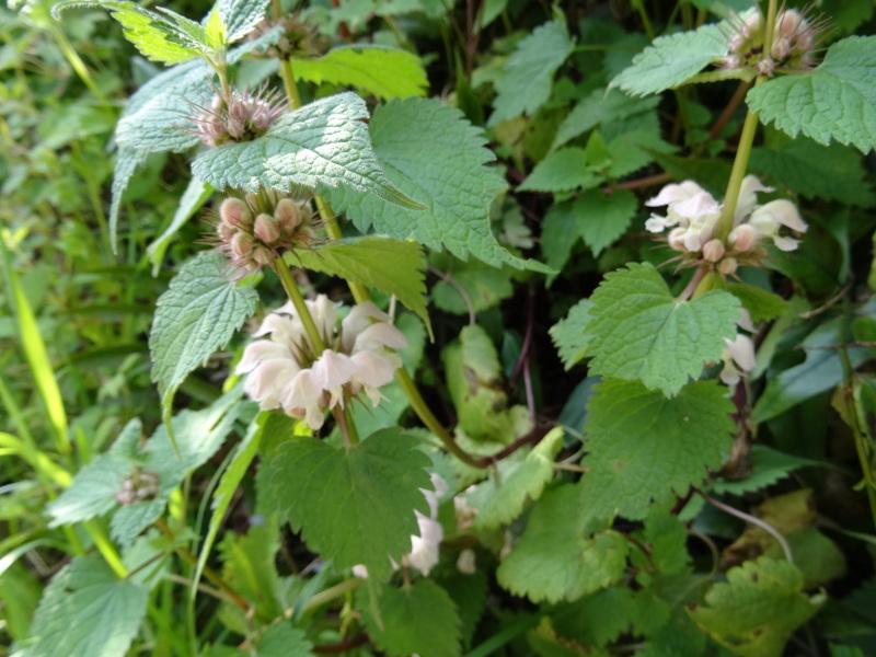 孝子の森の春の花たち_c0108460_16581580.jpg