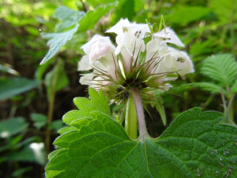 孝子の森の春の花たち_c0108460_16581607.jpg