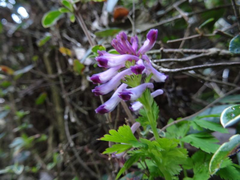 孝子の森の春の花たち_c0108460_16593900.jpg