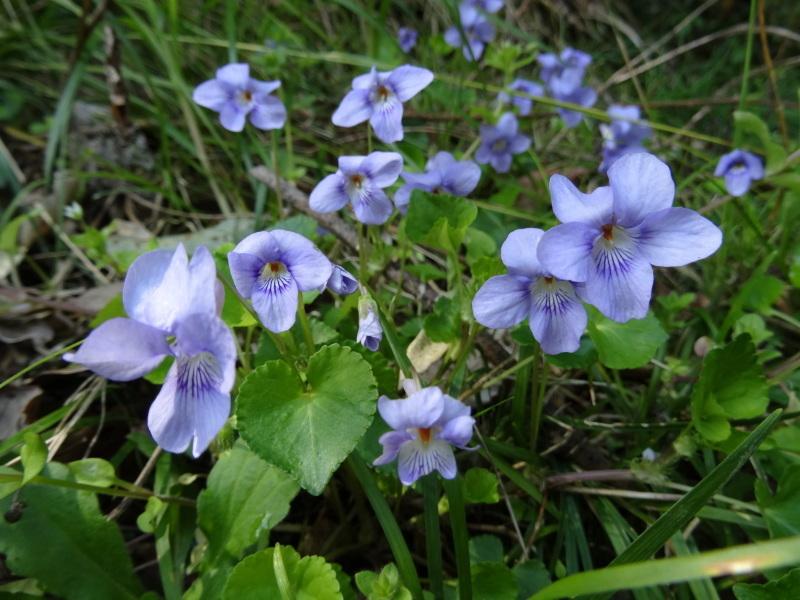 孝子の森の春の花たち_c0108460_16594039.jpg