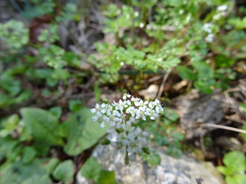 孝子の森の春の花たち_c0108460_17082424.jpg