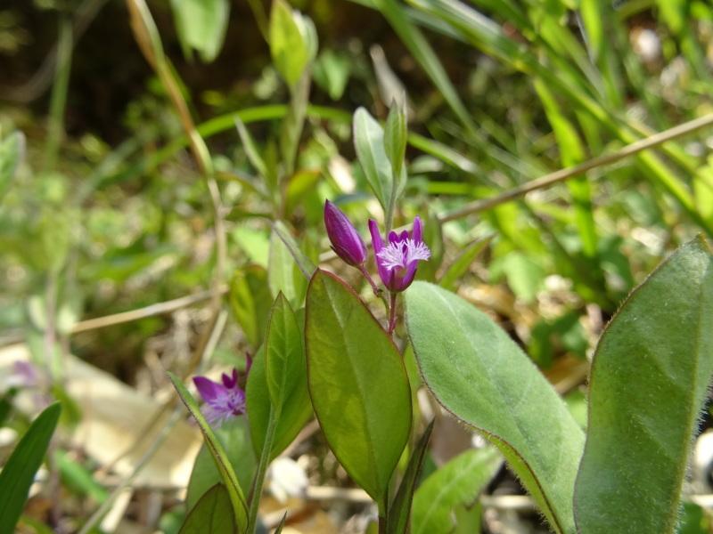 孝子の森の春の花たち_c0108460_17101496.jpg