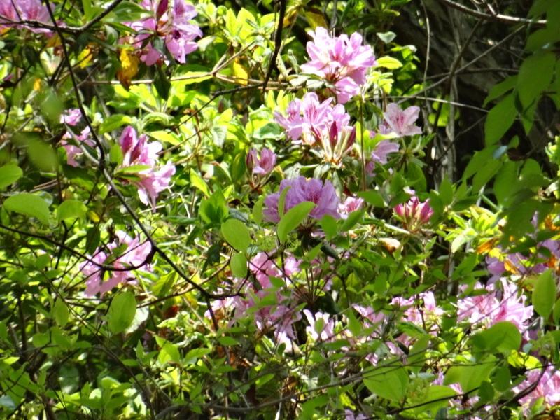 孝子の森の春の花たち_c0108460_17162945.jpg