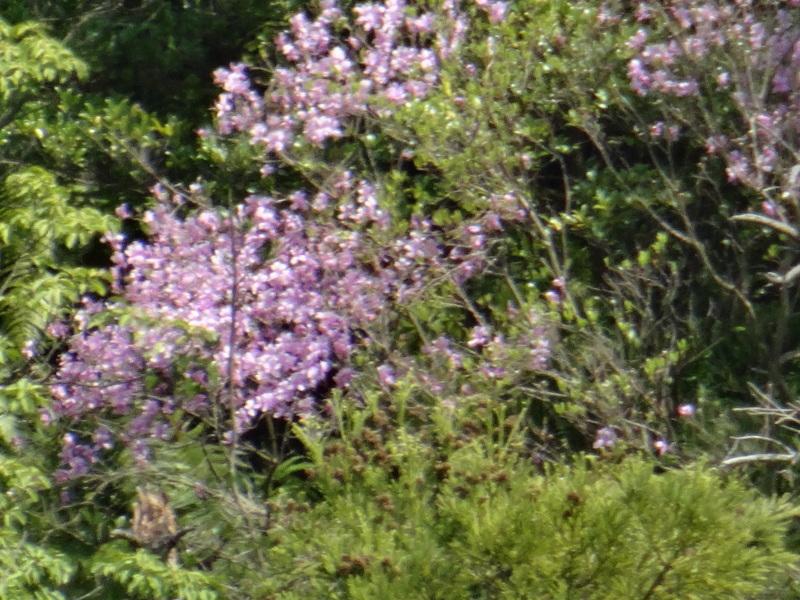 孝子の森の春の花たち_c0108460_17163131.jpg