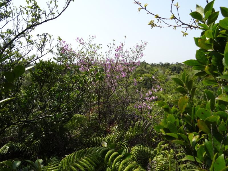 孝子の森の春の花たち_c0108460_17182480.jpg