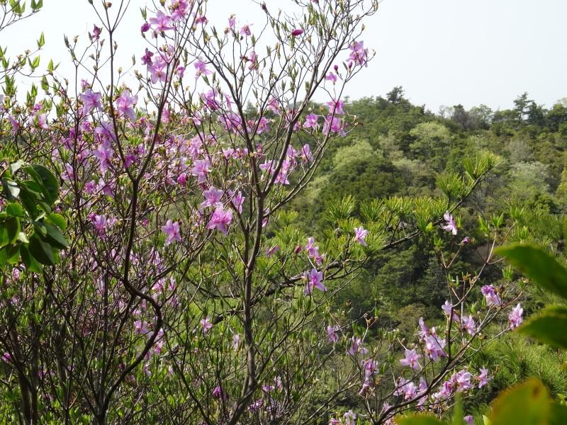 孝子の森の春の花たち_c0108460_17182581.jpg