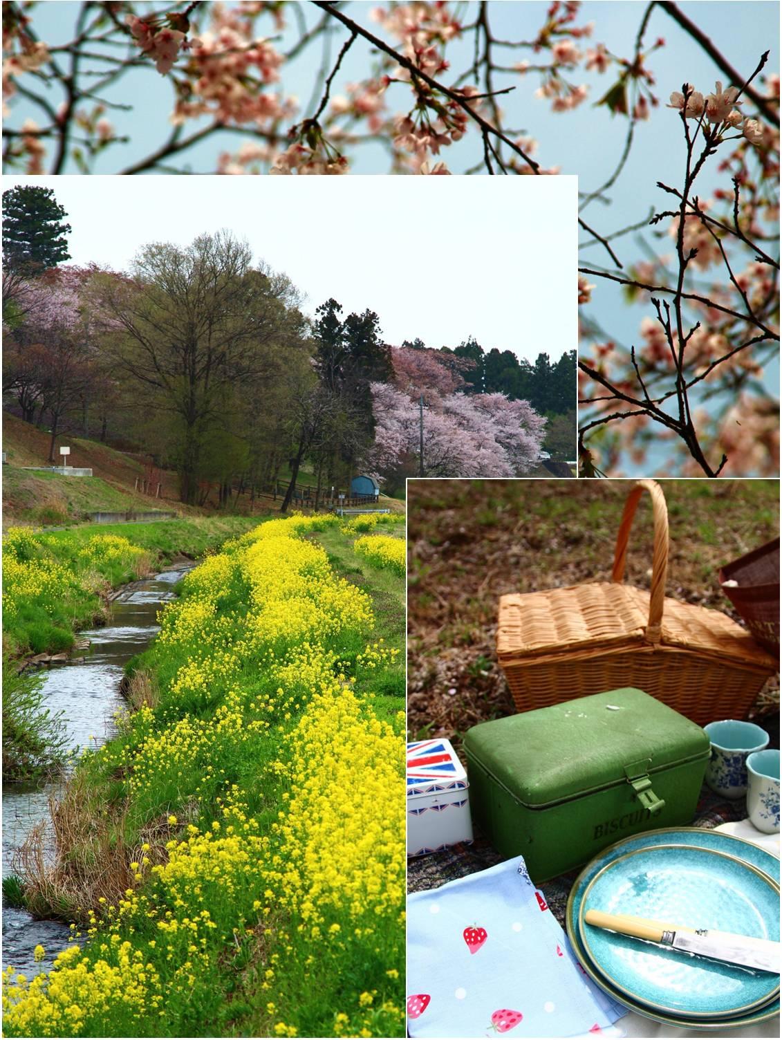 ピクニック in 桜吹雪_a0107981_1528244.jpg